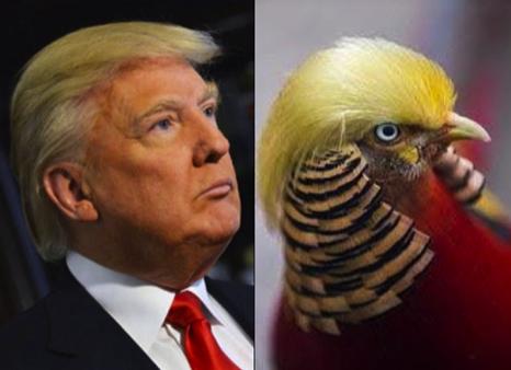trumpturkey